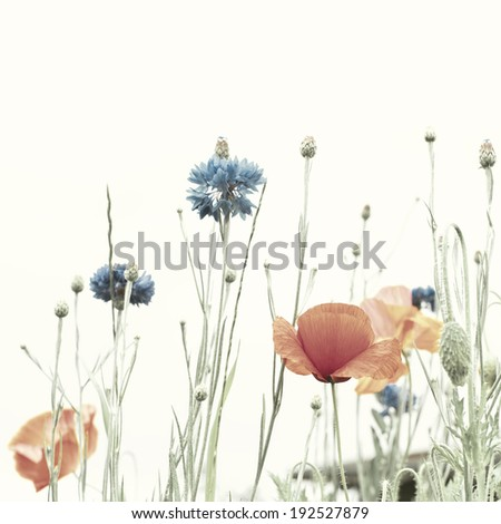 Blossoming poppies and cornflowers. Retro effect is added - stock photo