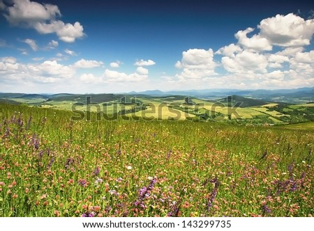 Blossoming summer meadow with mountains in the background
