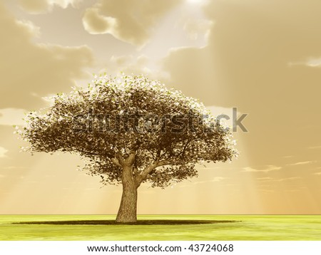 Blossoming tree in the god rays - stock photo