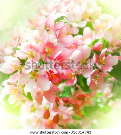 blossoming tree with beautiful pink flowers - stock photo