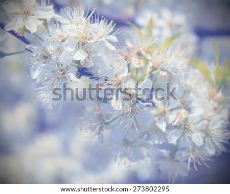 Blossoming tree with beautiful spring soft flowers