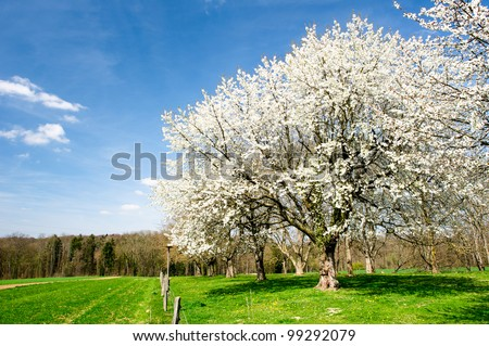 Blossoming trees in spring - stock photo