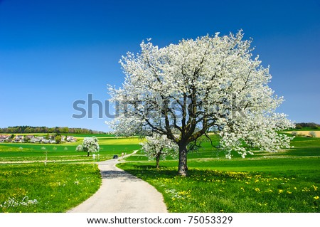 Blossoming trees in spring on green field. - stock photo