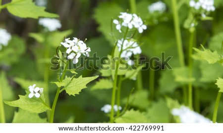 Blossoming wild field flowers, selective focus with shallow depth of field. - stock photo