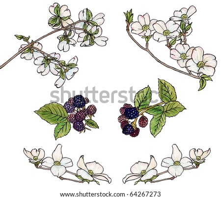 Blossoms & Berries - stock photo