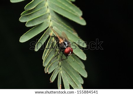 Blow-Fly - stock photo