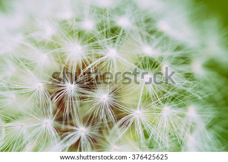 Blowball flower in macro as a positive background in green colors
