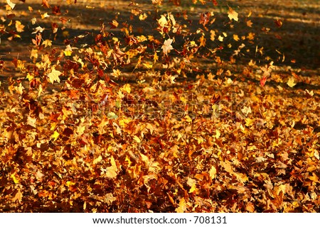 blowing fall leaves - stock photo