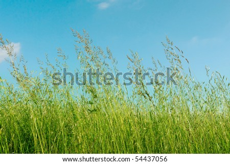 Blowing in the wind - stock photo