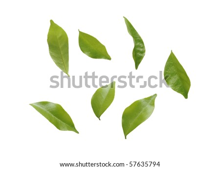 blowing leaves isolated on white background - stock photo