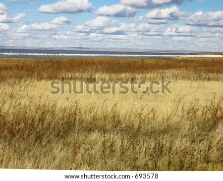 blowing prairie grasses in saskatchewan - stock photo