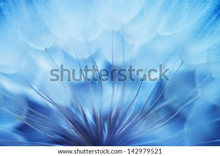 Blue abstract dandelion flower background, closeup with soft focus - stock photo