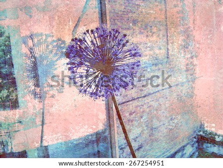 Blue allium flower reflected in a window pane. Floral background. Old texture. Interior decor. - stock photo