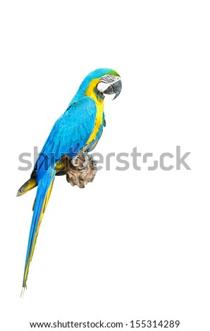 Blue and Gold Macaw aviary, isolated on a white background