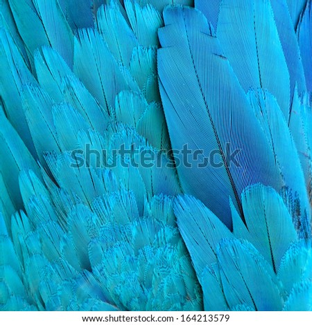 Blue and Gold Macaw feathers. - stock photo