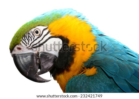 Blue and Gold Macaw isolated on white. - stock photo