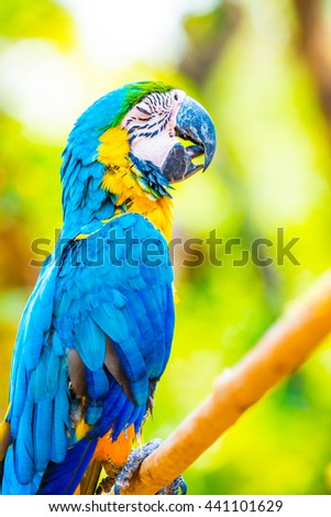 Blue and Gold Macaw on the branch in Thailand