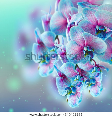 blue and pink orchid branch on bokeh background - stock photo