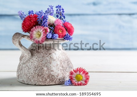 Blue and red daisy flower in vase - stock photo