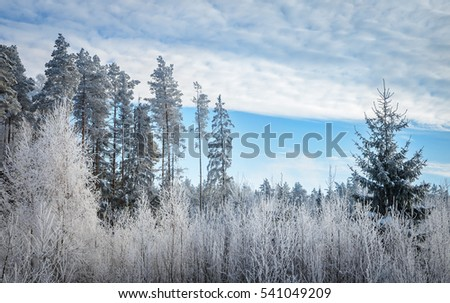 blue and white winter colors of the forest