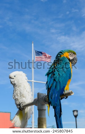 blue and yellow macaw birds - stock photo
