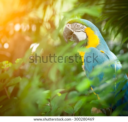 blue and yellow macaw closeup - stock photo