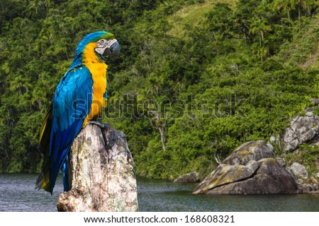 Blue and Yellow Macaw in Amazon, Brazil - stock photo