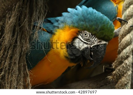 Blue and yellow macaw on a tree branch with rope