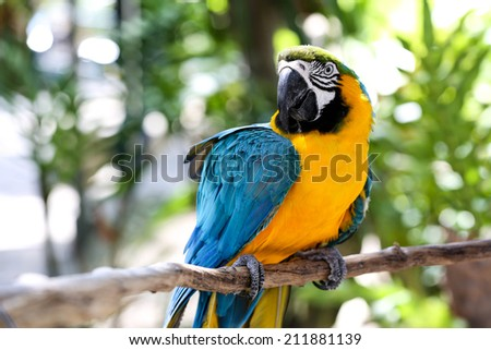 blue and yellow Macaw portrait  - stock photo