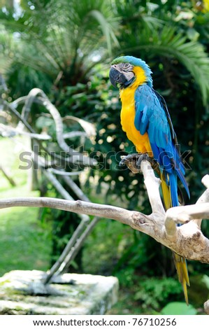 Blue-and-yellow parrot sitting on branch of the tree - stock photo