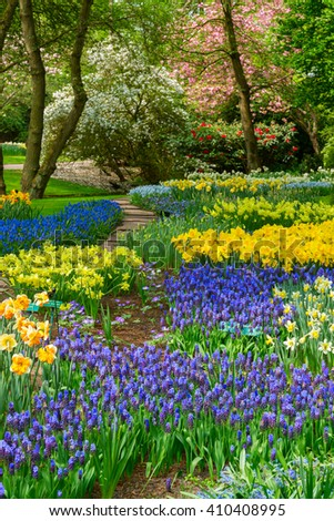 Blue and yellow spring  of flowers  in holland garden Keukenhof, Netherlands - stock photo
