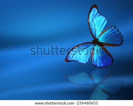 Blue background with butterfly - stock photo