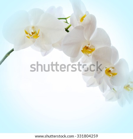 Blue background with orchid flowers  - stock photo