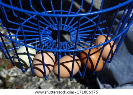 Blue Basket Full of Farm Fresh Eggs - stock photo