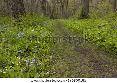 Blue Bell Flowers Trail - stock photo