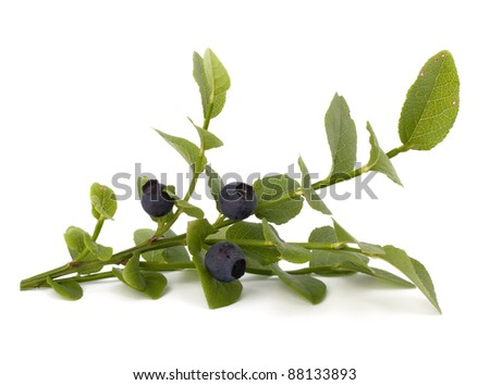 Blue bilberry or whortleberry isolated on white background