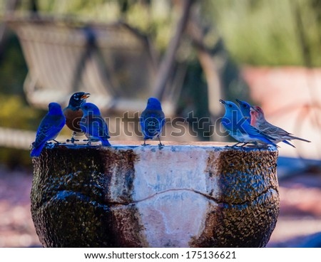 Blue Bird Day - stock photo