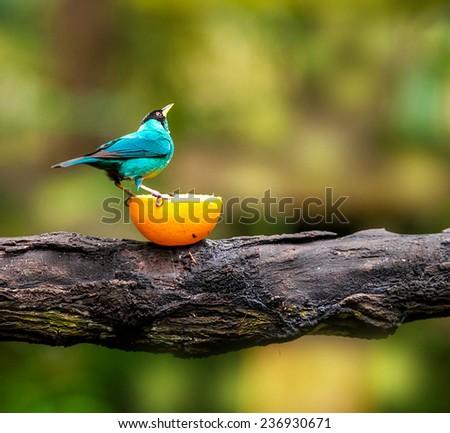 Blue bird sitting on a branch, wildlife - stock photo