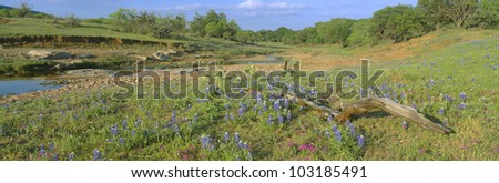 Blue bonnets in Hill Country, Texas - stock photo
