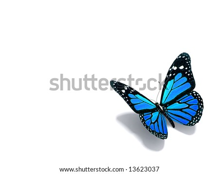 Blue butterfly - stock photo