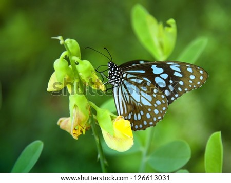 blue butterfly in a green garden searching for nectar by yellow flowers.