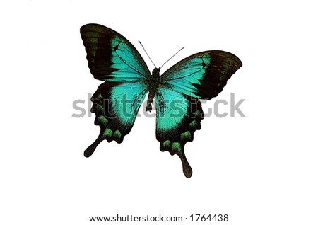 blue butterfly isolated on a white background - stock photo