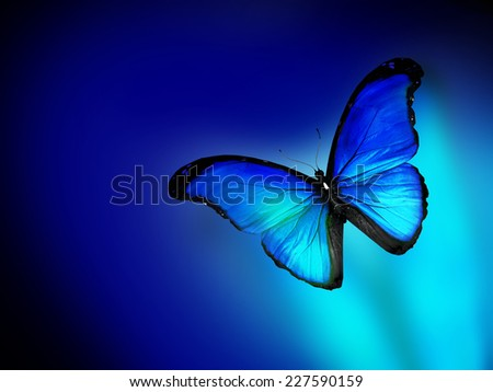 Blue butterfly on dark blue background - stock photo
