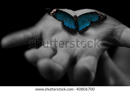 blue butterfly on human's hand - stock photo