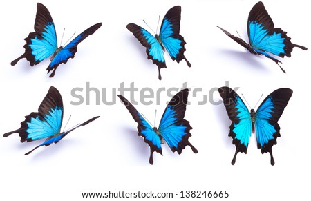Blue butterfly, Papilio Ulysses, isolated on white background - stock photo