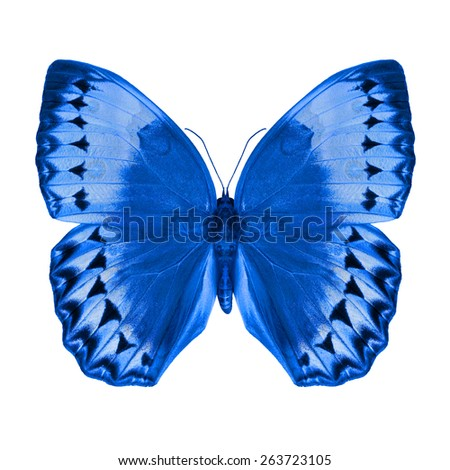 Blue butterfly upper wing profile isolated on white background. - stock photo