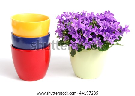 blue campanula and flower pots - stock photo