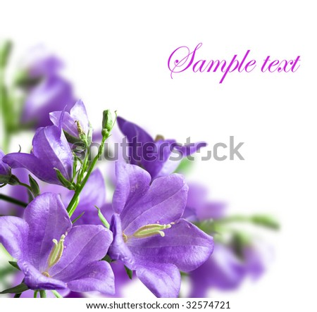 blue campanulas isolated over white - stock photo