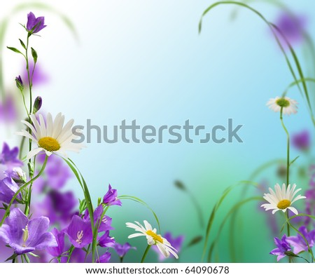 blue campanulas with daisywheel on white and blue background - stock photo