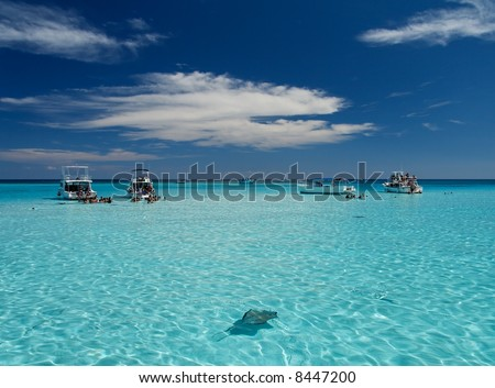 Blue caribbean water with stingrays - stock photo